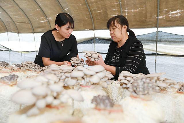 织里镇:小蘑菇撑起致富伞